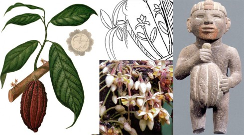 Las foras vegetales de la Incógnita y su semejanzas a la planta, flor y fruto del cacao, en fotografias y otras representaciones.